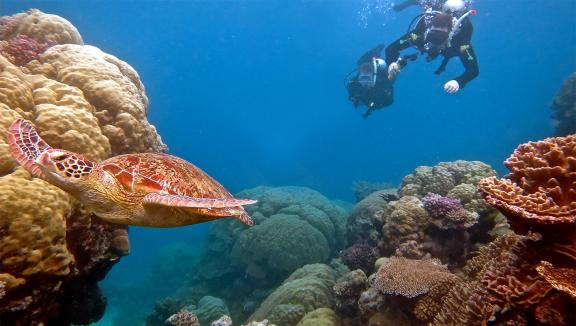 The Great Barrier Reef is excellent for diving from a superyacht.